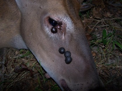 Pictures of Deer Deformities