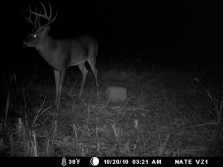 Just a great buck.