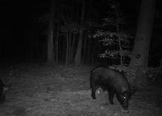 SC Hogs