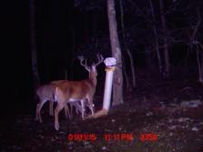 Some 2011 bucks