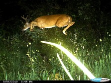 This Deer Can Fly