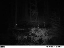 Trail cam pics