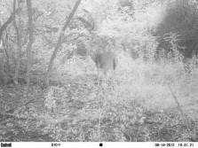 Trail cam pic's
