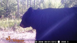 Wildgame trailcam