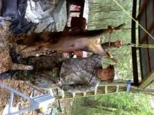 Gobbler season hog