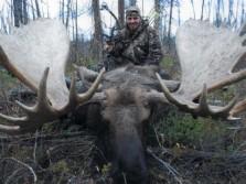 1,600 lb Bull