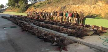 100+ Hogs