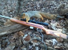 Monster squirrels in PA