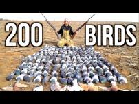 200 Pigeons