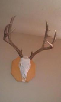 2010 buck