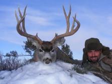 2011 mule deer