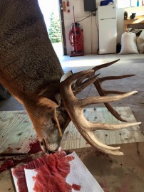 2015 Wisconsin Gun Buck (Pic 2)