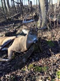 2015 Wisconsin Gun Buck