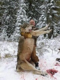 285lbs Minnesota Monster Wolf!!