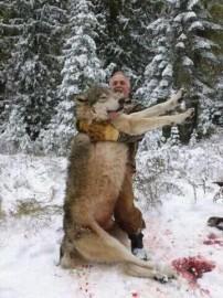 285lbs Minnesota Monster Wolf!!