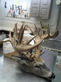 29 Point Buck