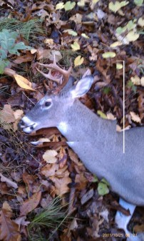 a small 8 pointer from 2011