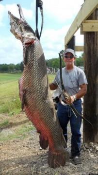 365-pound Alligator Gar shot with a recurve