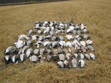 Goose/Duck Hunt
