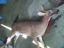 6 Point with a RAGE