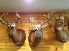Random Archery Bucks
