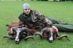 New Zealand Arapawa Ram Hunting