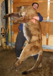 Now this is a big cat!