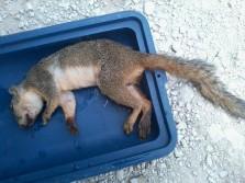 squirrel huntin