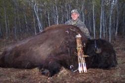 Alberta Record Bison
