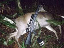 AR15 vs Red deer at 100m