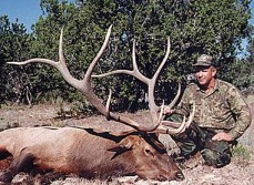 B & C 382-3/8 American Elk