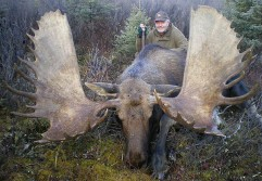 Big Canadian Moose