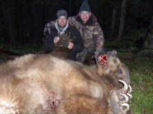 Big Alberta Grizzly