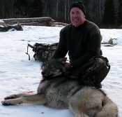 Big British Columbian Wolf Hunted
