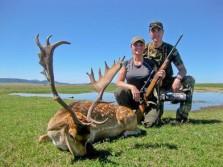 Big Fallow Deer