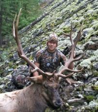 Big Montana Bull