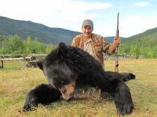 Nice black bear