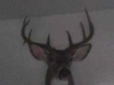 bow kill 2011