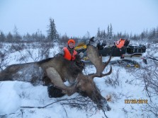 Canada Moose 2012