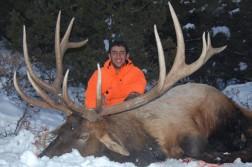 Coloardo Elk
