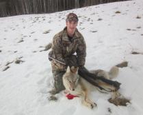 Coyote november 15