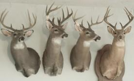 Deer taken on farm over the last 10 years