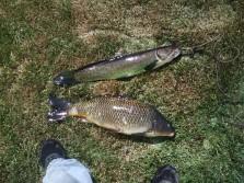 dogfish and carp fishin'