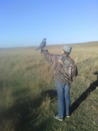 Duck hunting with FALCONS!!