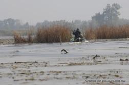Ducks Hunting in Poland