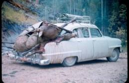 Elk season.