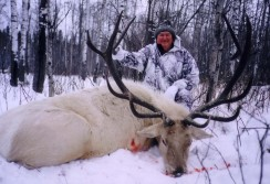 Ever seen a white Elk?