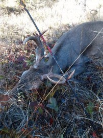 First archery Buck