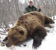 Giant Grizzly Hunted Down in Alaska