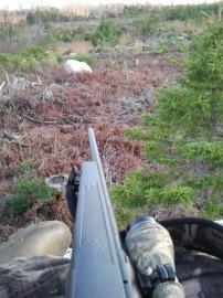Waitin on a Deer